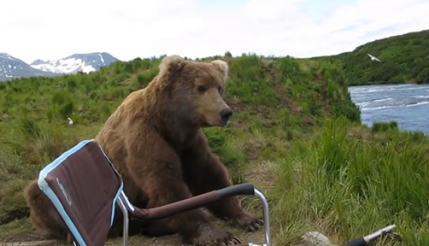 Video: Grizzly Gets Way Too Close to Photographer