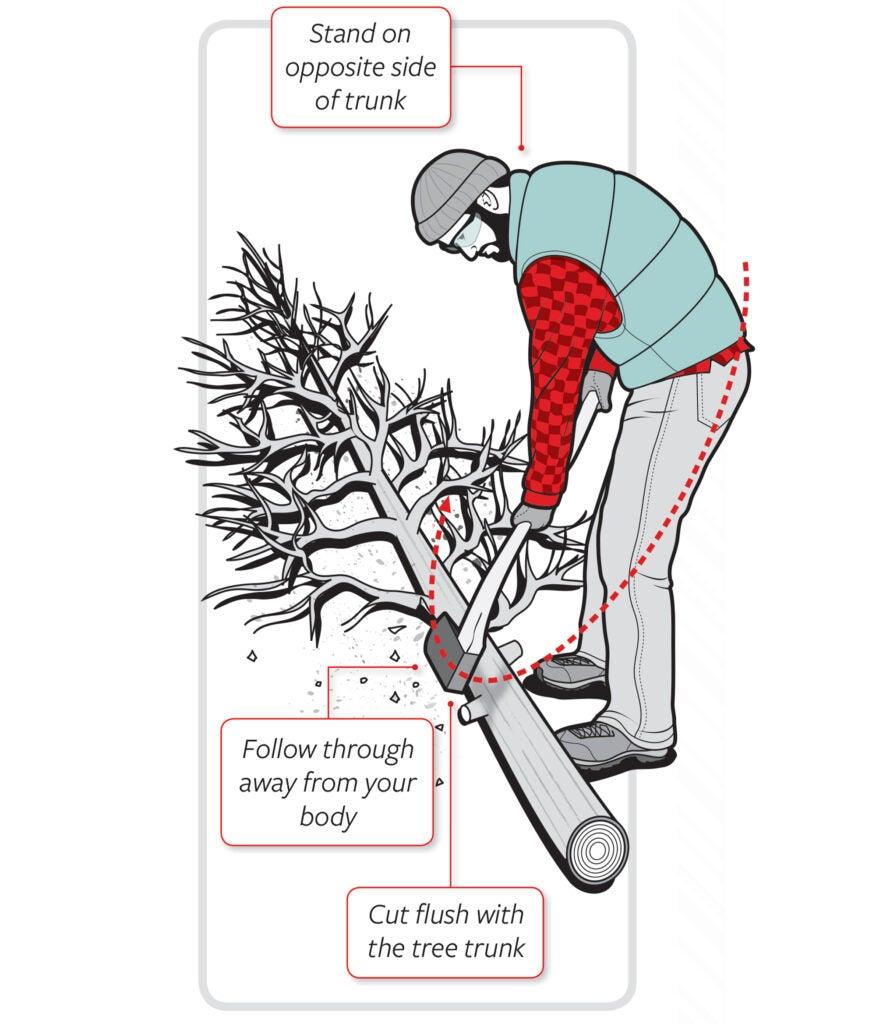limbing a tree