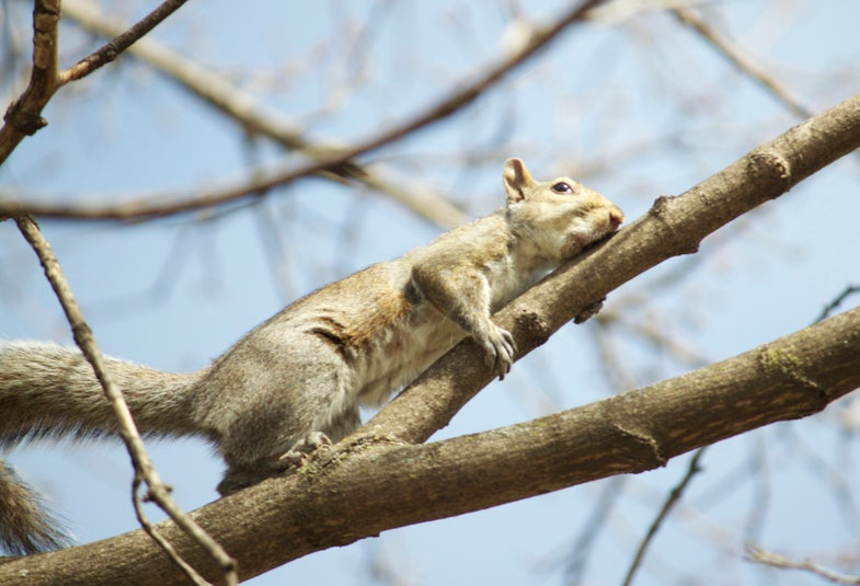 The Kansas Hunt: Windsurfing Squirrels and Woodpeckers