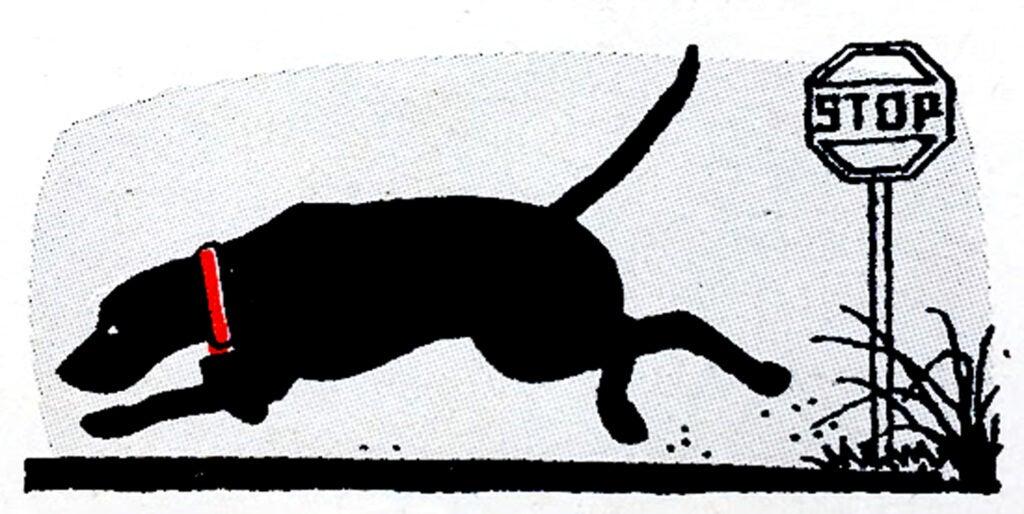 hunting dog safety