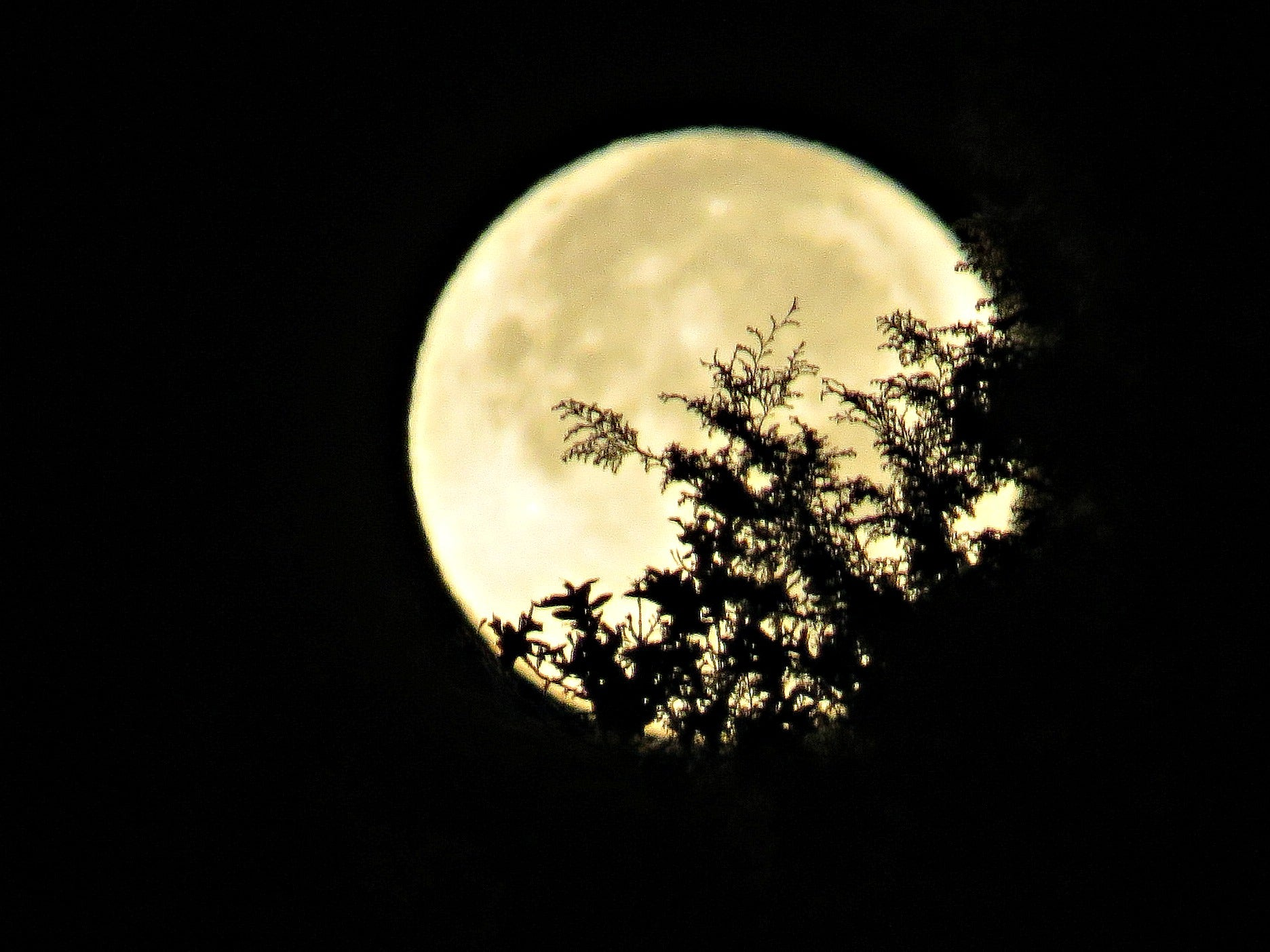Will the Supermoon Cause a Super Deer Hunt?