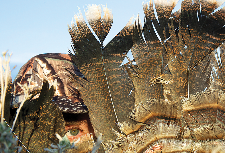 Turkey Reaping: How to Fan a Gobbler