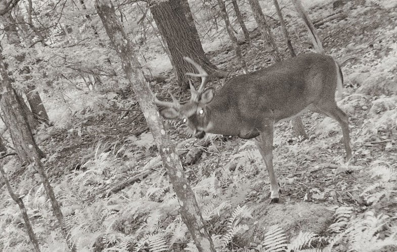 First Freeze Primes Massachusetts for Banner Opening Day