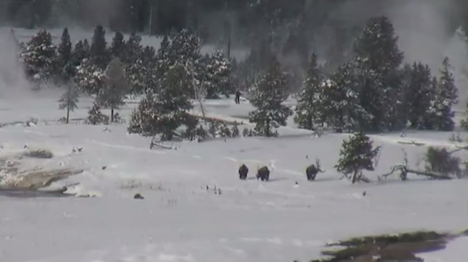 Yellowstone Spokesman Responds to Supposed Bigfoot Video Taken Near Old Faithful