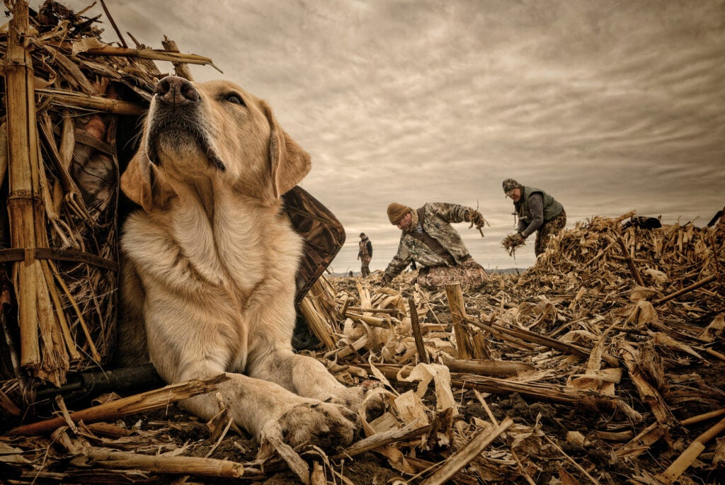 bird dog