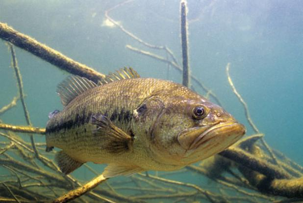 Bass Fishing: How to Find the Hottest Bite on the Lake
