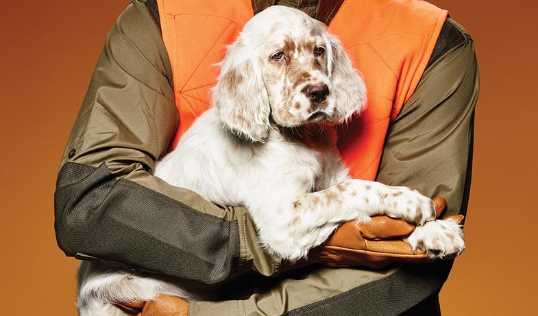 dog commands, dog. whoa, teaching a gun dog, gun dog