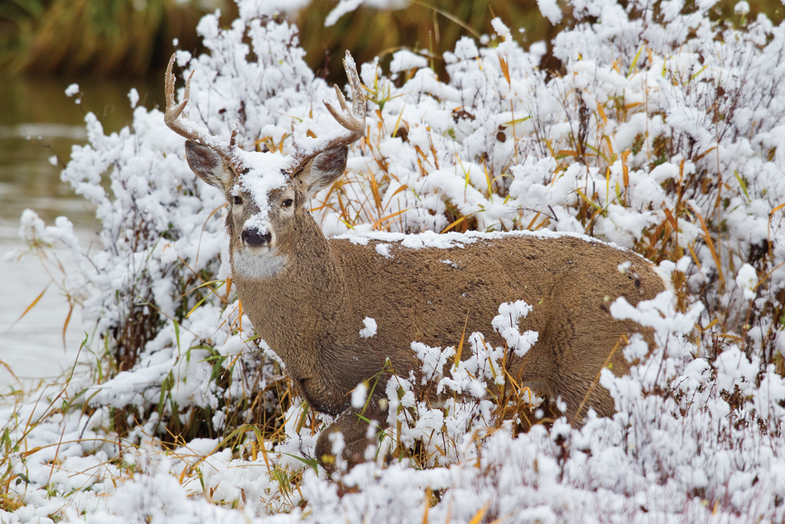 Tips from the Guides: How to Drive Late-Season Bucks in a Draw