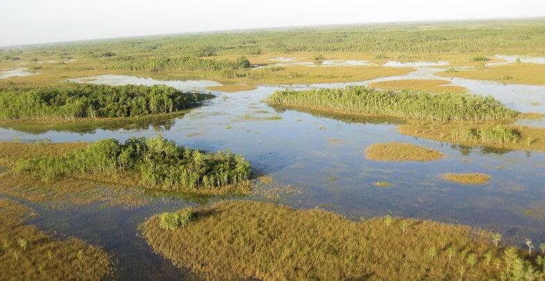 Florida Legislature Votes to Build Reservoir to Combat Toxic Algae