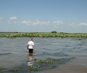 Let it Flood: How We Can Create a Fishing and Hunting Paradise, Lower the Deficit and Clean the Waters All at Once