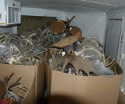 Trafficking Sting Recovers More Than 500 Sets of Deer, Big Game Antlers