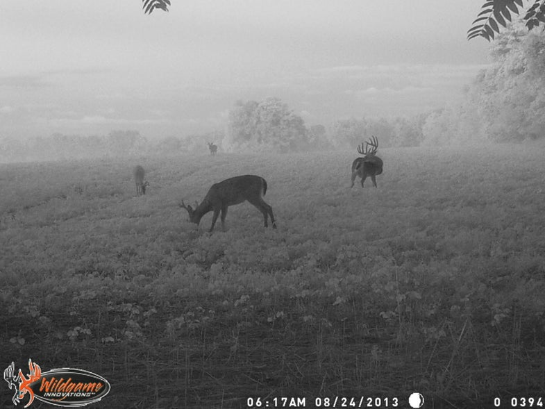 Best Trail Camera Photos of Fall 2015, Round 1