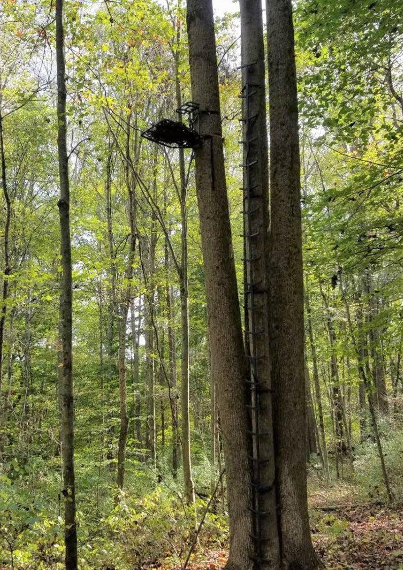 very high treestand