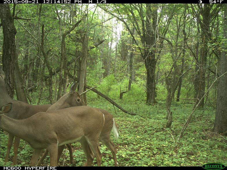 Low Deer Numbers, But Plenty of Food in Northeast