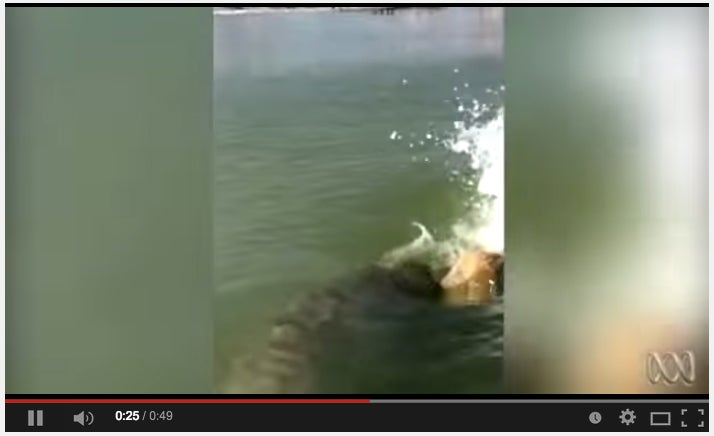 Grouper Almost Flips Anglers Out Of Jon Boat