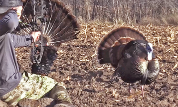 How to Reap Turkeys, with the Original Turkey Reaper