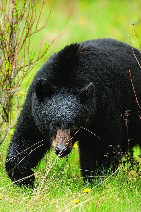Close Calls: Hunter Attacked By Bear