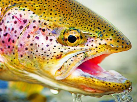 20 Secrets to Help You Catch Fish All Summer Long