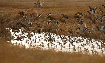 How to Find Duck Honey Holes After Opening Day