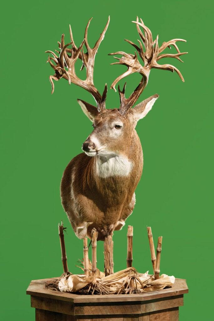 Tucker Buck world-record whitetail replica