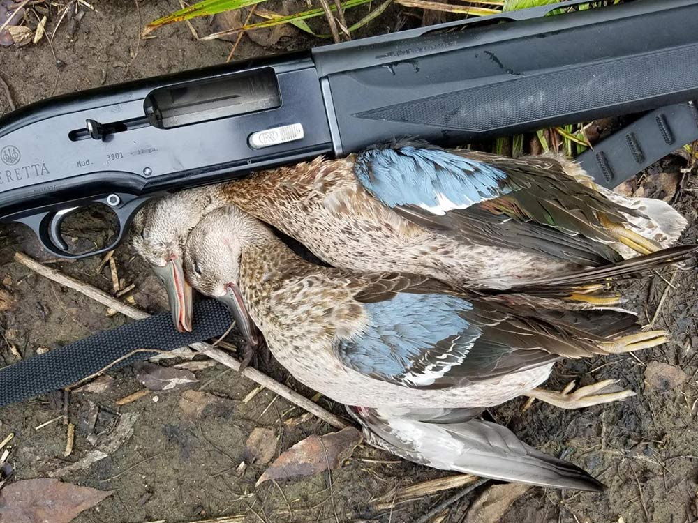 a pair of bluewing teal next to a beretta shotgun