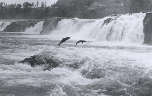Record Salmon Season Predicted for Washington Fisheries