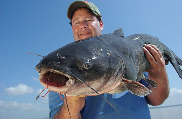 Summer Fishing Adventure: The Catfish Coast
