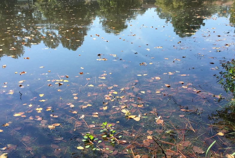 How Those Annoying Fall Leaves Can Help You Catch More Bass