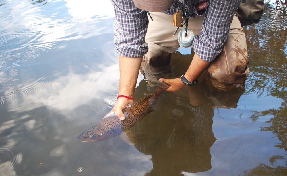 Five Tips for Catching Trophy Brown Trout in Autumn