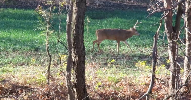 Video: The Rut Slow in Kansas, in Full Swing in the Northwest