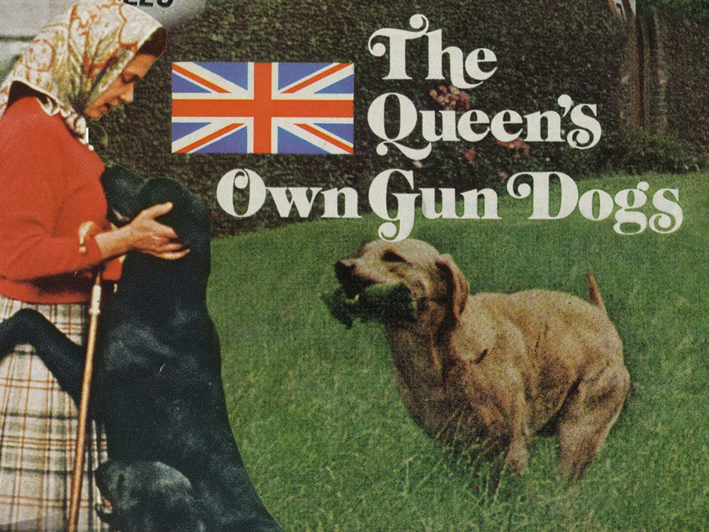 field and streams queens own gun dogs collage