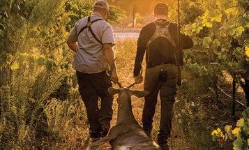 The Vintage Buck: A Deer Hunt in California Wine Country