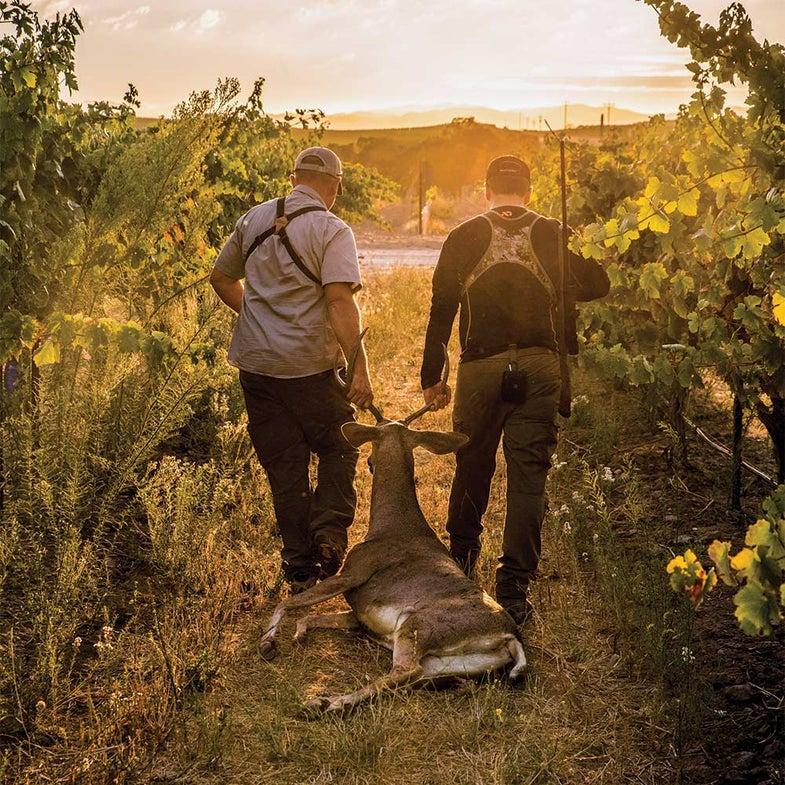 two hunters dragging blacktail deer by antlers