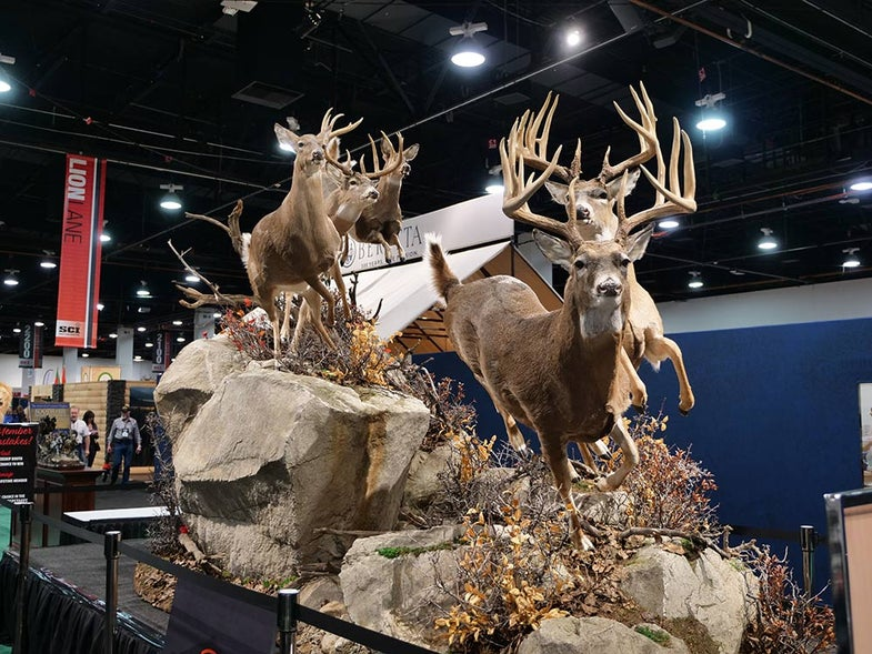 sci convention whitetail taxidermy