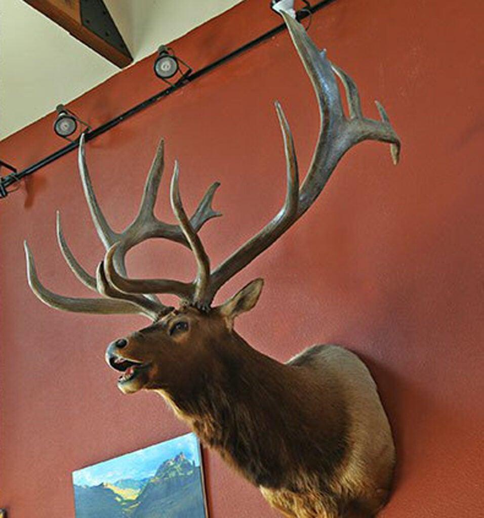 record bull elk