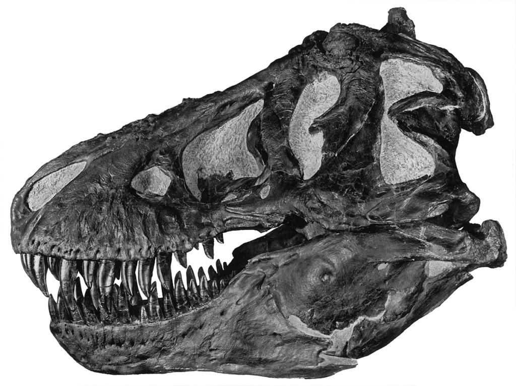 trex skull