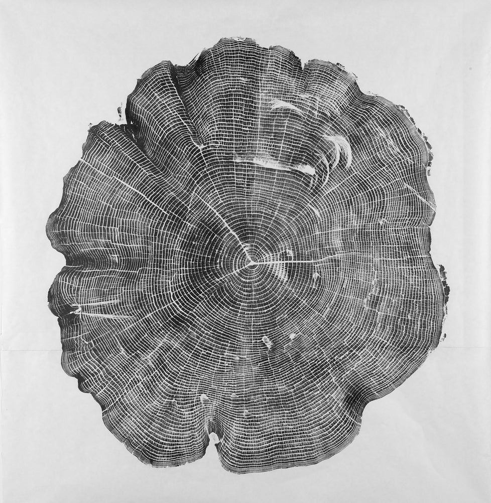 Hunter, Angler Reveals the Hidden Lives of Trees With Old-School Inking Process