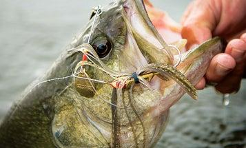 Three Ways to Tweak Spinnerbaits for Largemouth Bass