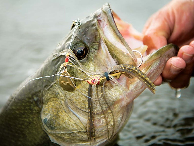 bass fishing with spinner bait