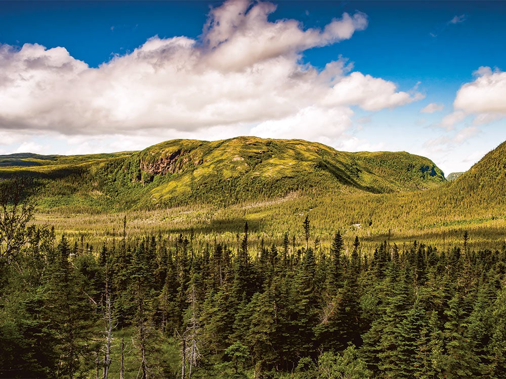 The Mountainous Terrain of Newfoundland