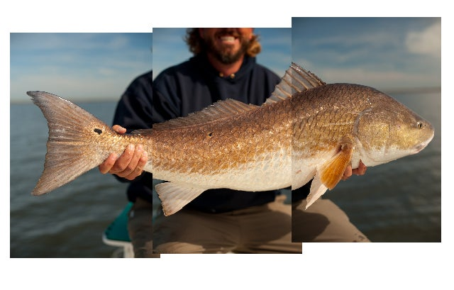 Louisiana's Redfish Culture is Running Out of Marsh