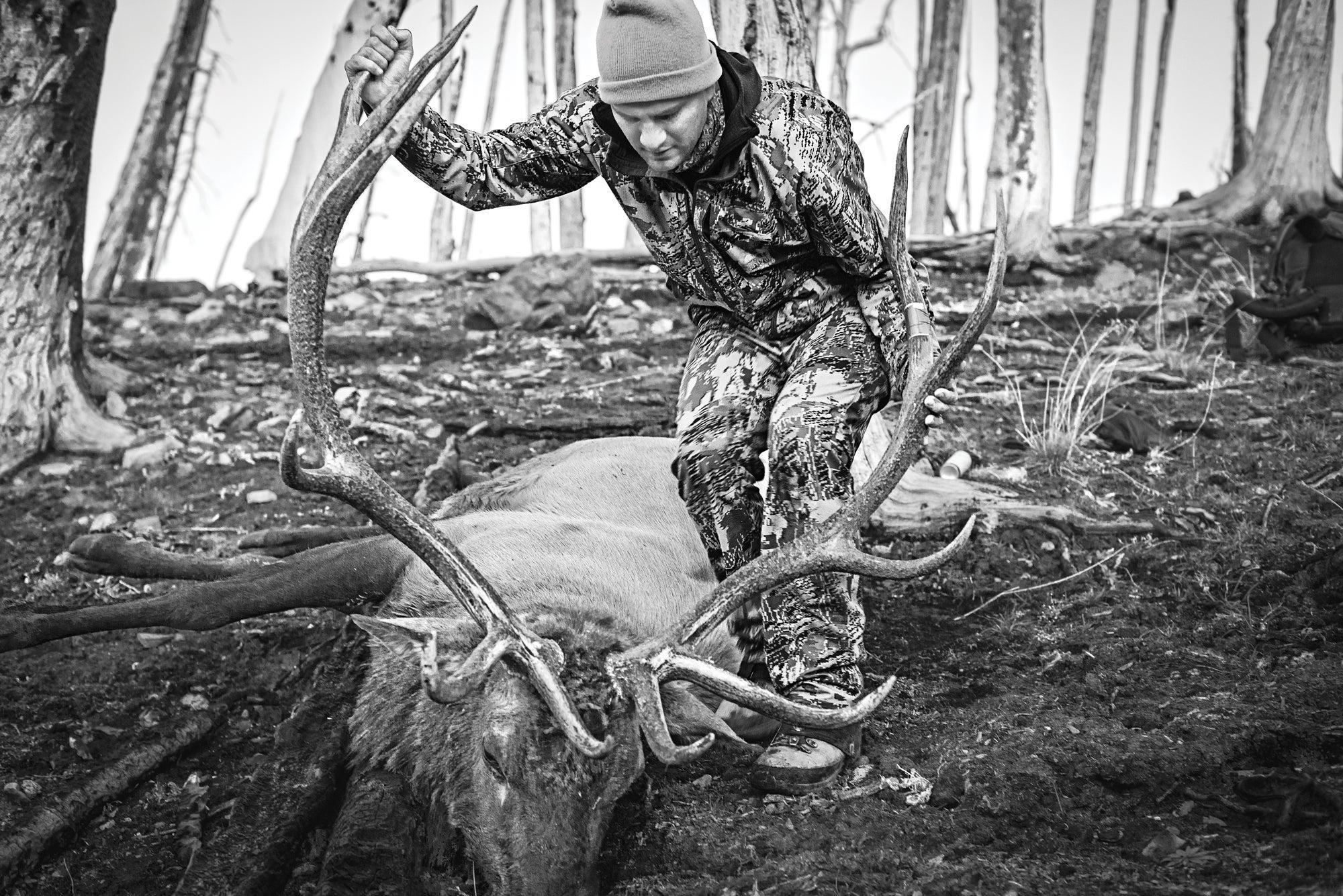 elk hunting, elk, hunting,