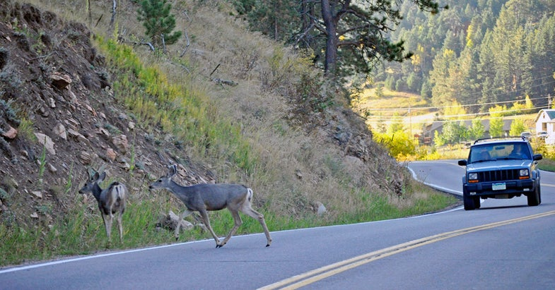 Canvas Sacks May Lead to Fewer Deer-Related Car Crashes