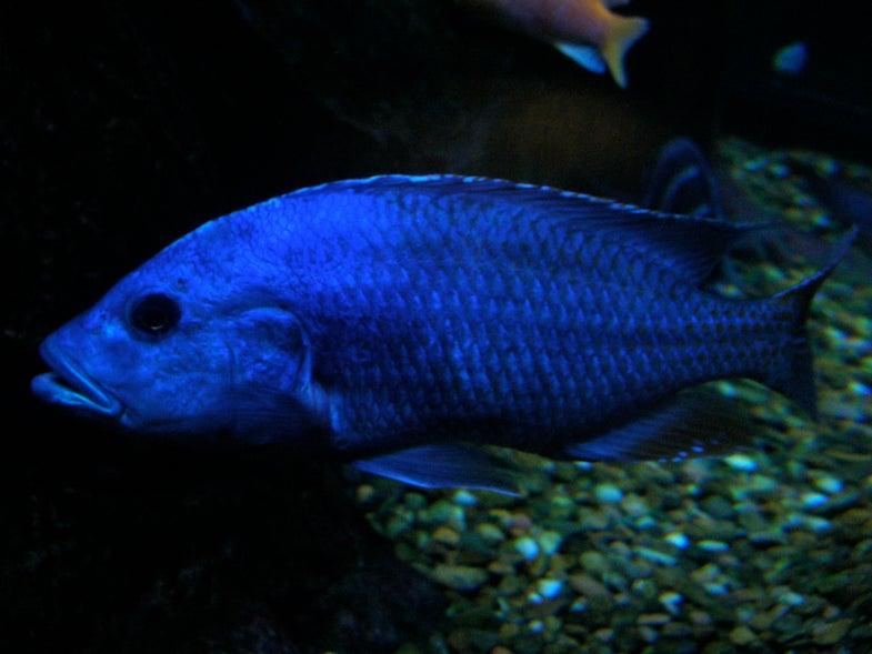 New Study Shows Fish Communicate Through Pee