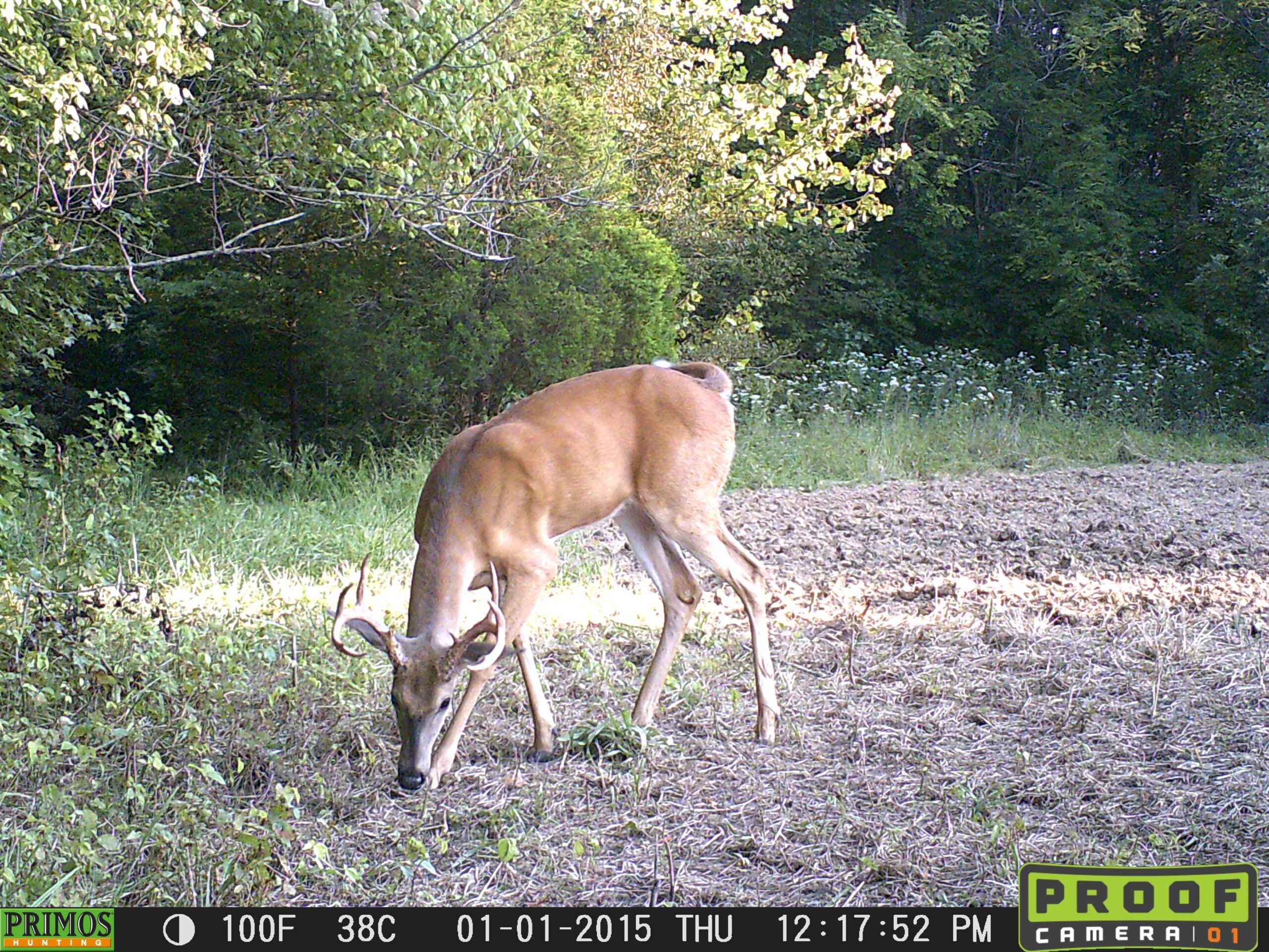hard-horned buck