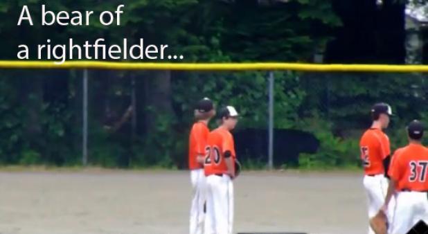 Video: Black Bear Delays Baseball Game in Alaska