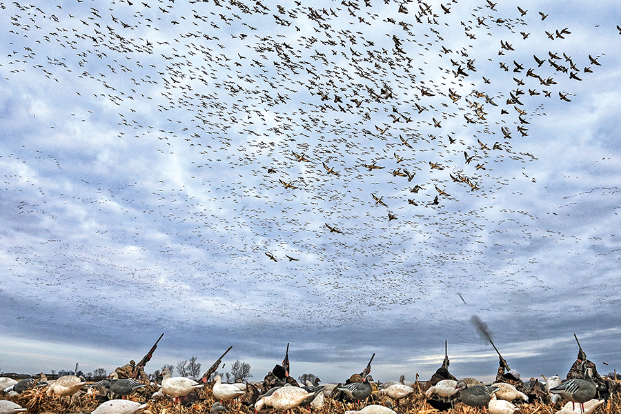 Snow Geese Hunting Tips
