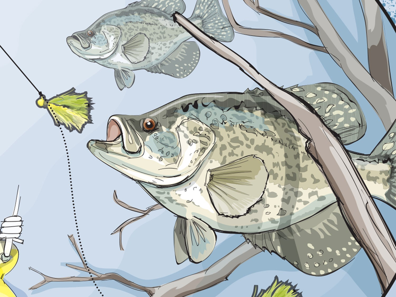 Three Tactics for Hooking Stubborn Spring Panfish