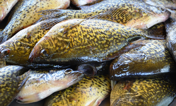 How to Catch Crappies All Summer Long