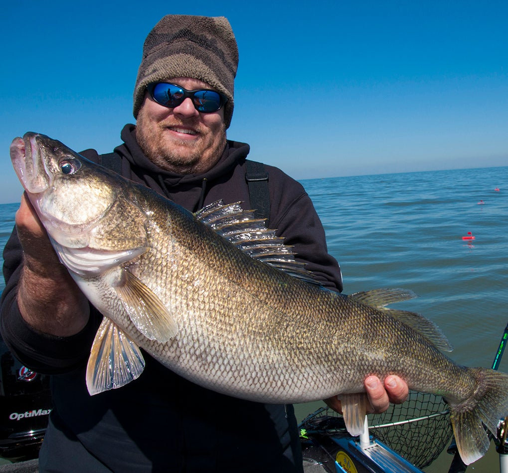 Check For Prime Walleye Clarity The Easy Way